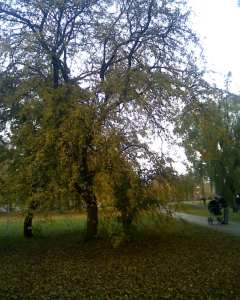Outono na Dinamarca